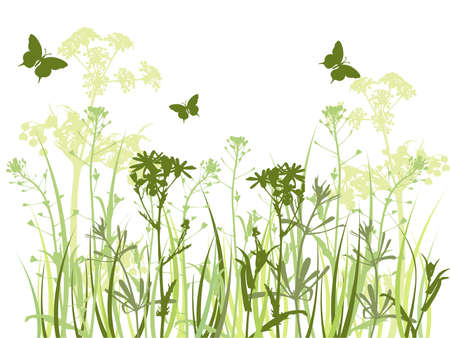 background with green grass, camomile flowers  and butterfly