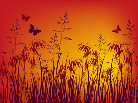 oat field: sunset background with grass and flowers