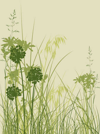 oat field: background with green grass and flowers