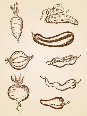 zapallo italiano: conjunto de iconos de vegetales vintage dibujado a mano