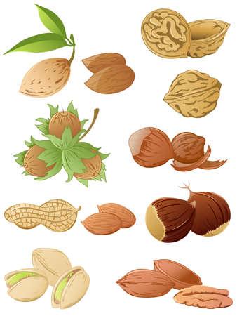 amande: ensemble de noix divers Illustration