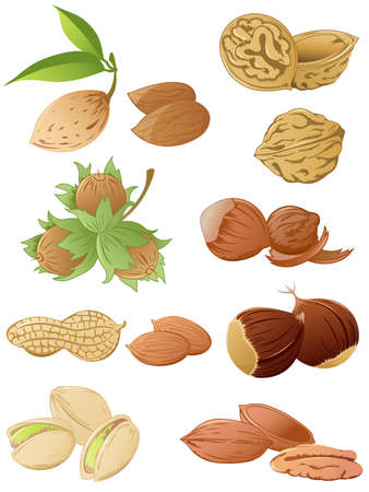 pecan: set of various nuts Illustration