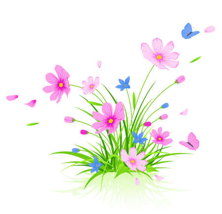 cosmos flower: vector floral background with red cosmos flowers Illustration