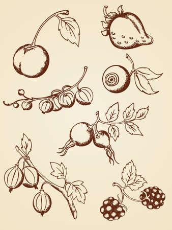 grosella: conjunto de bayas dibujado a mano en estilo retro Vectores