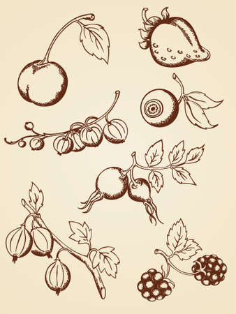 set of hand drawn berries in retro style