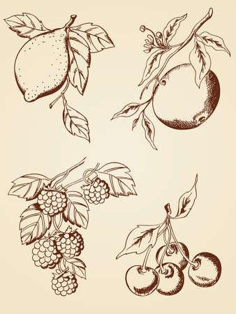 moras: conjunto de dibujado a mano bayas y frutas en estilo retro Vectores