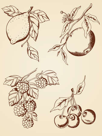 set of hand drawn  berries and fruits  in retro style