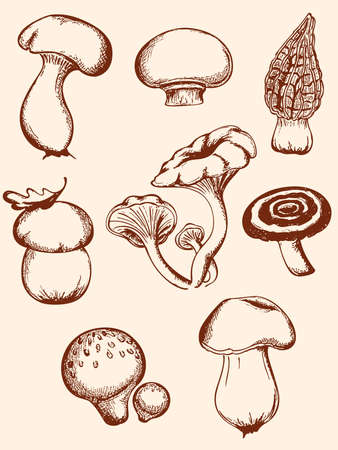 set of hand-drawn vintage mushrooms Illustration