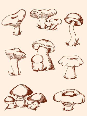 set of hand-drawn vintage mushrooms Çizim