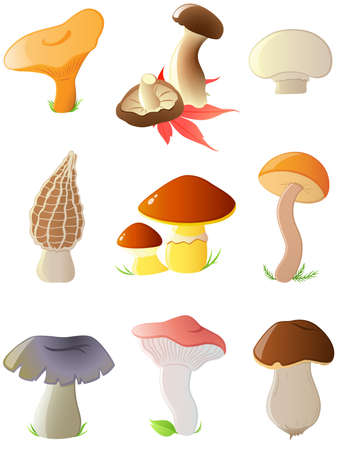 agrarian: set of vector glossy forest mushrooms