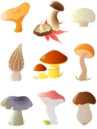 morel: set of vector glossy forest mushrooms