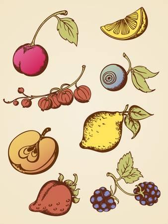 set of hand drawn vintage fruits Vector