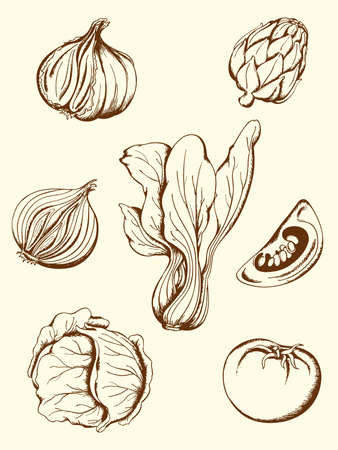 green cabbage: set of hand drawn vector vintage vegetables icons