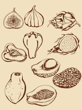 avocado: set of vintage hand drawn vector tropical fruits