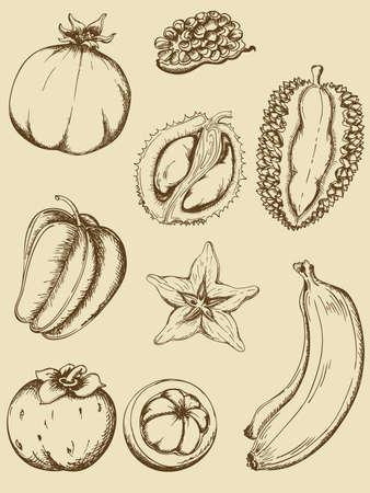 mangostano: set di epoca frutti maturi tropicali Vettoriali