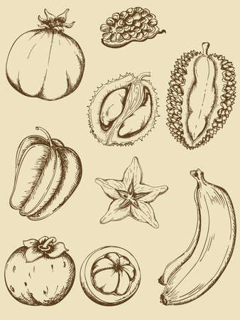 set of vintage ripe tropical fruits