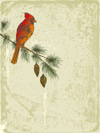 vector retro Christmas background with Cardinal bird