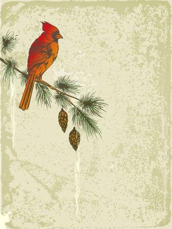 uccelli su ramo: vector retro Natale sfondo con l'uccello cardinale Vettoriali