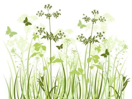 fleurs des champs: Fond vectoriel vert avec des fleurs sauvages et papillons