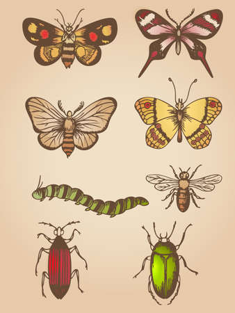 Set of vector hand drawn vintage butterfly and insects Иллюстрация