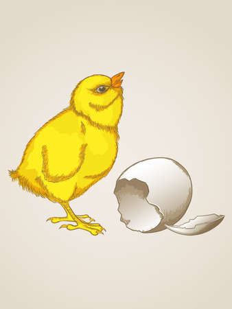 Vector vintage hand drawn yellow chicken