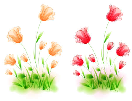 tulips in green grass: Red and orange vector tulips on a white background