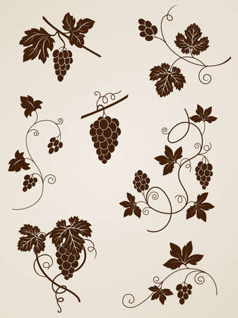 grapes on vine: decorative grape vine elements for design