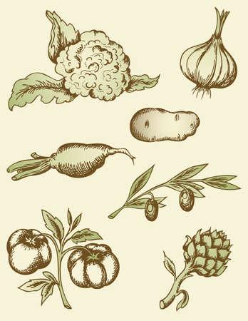 콜리 플라워: 손 빈티지 야채를 그려