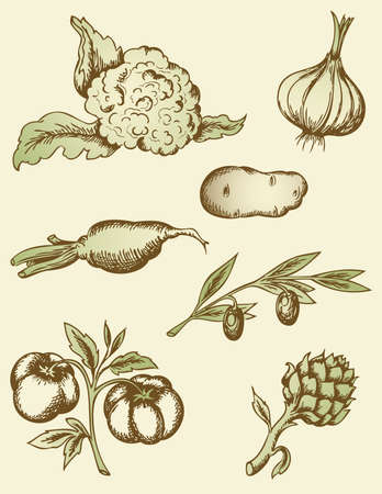 disegnati a mano le verdure d'epoca
