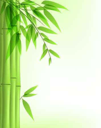 bamboo tree: Vector background with green bamboo
