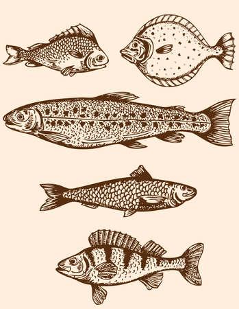 peces de agua salada: Juego de mano de la vendimia dibujado peces de agua salada Vectores