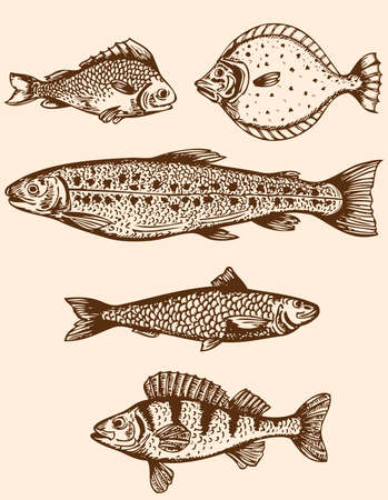 salmon fish: Set of vintage hand drawn saltwater fishes