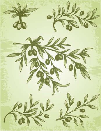 Vintage decorative element of olive branch  Çizim