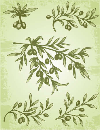 Vintage decorative element of olive branch  Illustration