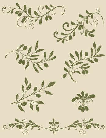 foglie ulivo: Vintage ramo decorativo di oliva Vettoriali