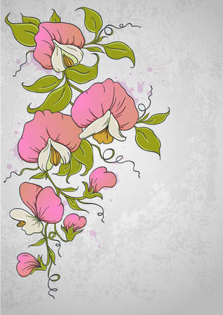 vintage floral  background with sweet pea  Vector