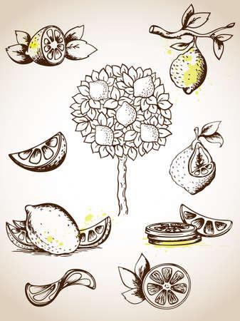 lemon tree: Set of vintage lemons and lemon tree