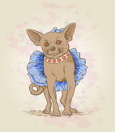 Small decorative dog in blue dress and collar
