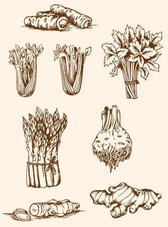 ginger root: Set of vintage hand drawn vegetables