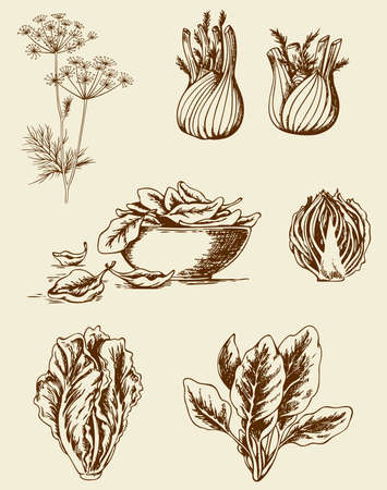 Reeks uitstekende hand getekende groenten