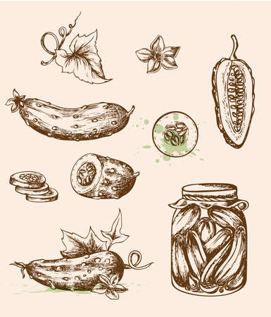 pickled: Set of vector vintage hand drawn cucumbers