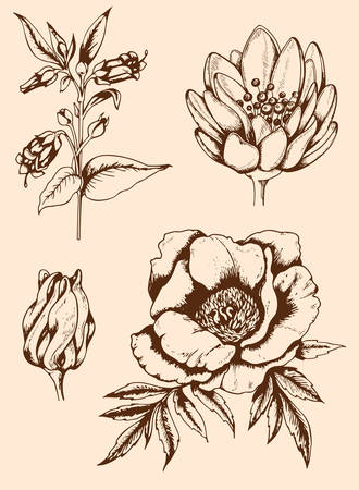 Set of vector vintage hand drawn flowers Vector