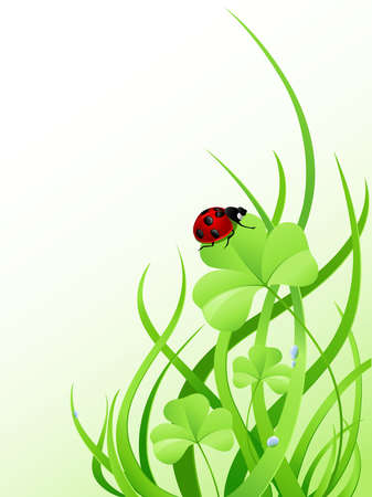 ladybird: Background with green grass, clover and ladybird