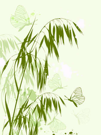 oat field: background with green oat and butterflies