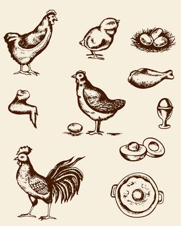 Set of vintage hand deawn chickens and eggs Illustration