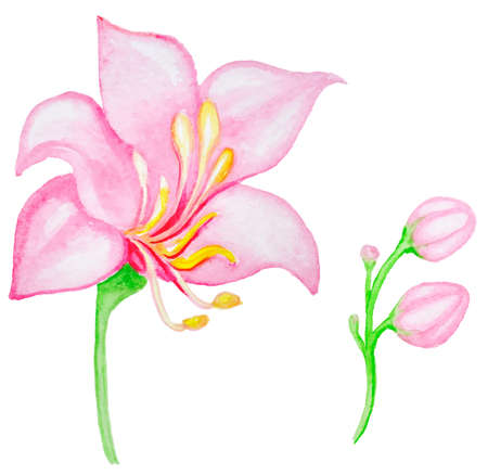 tropical flower: Watercolor pink tropical flower, vector illustration