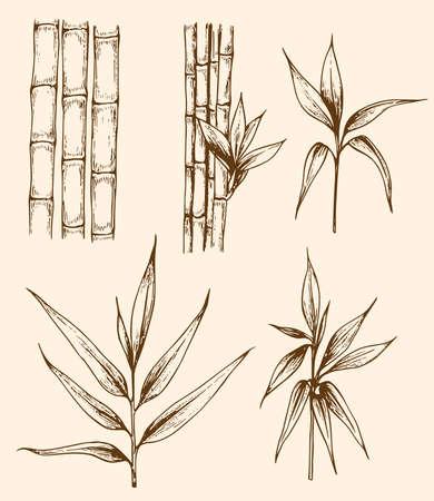 bambou: Ensemble de dessiné à la main des branches de bambou cru Illustration
