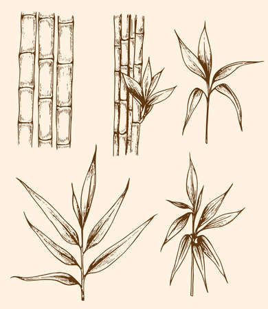 Set of hand drawn vintage bamboo branches