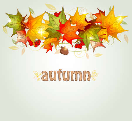 fall leaf: Abstract autumn background with maple leaves and acorn