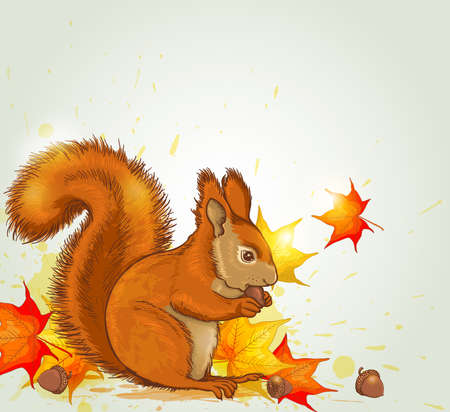 red squirrel: Autumn vector background with red fluffy squirrel and maple leaves Illustration